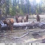 Nice herd